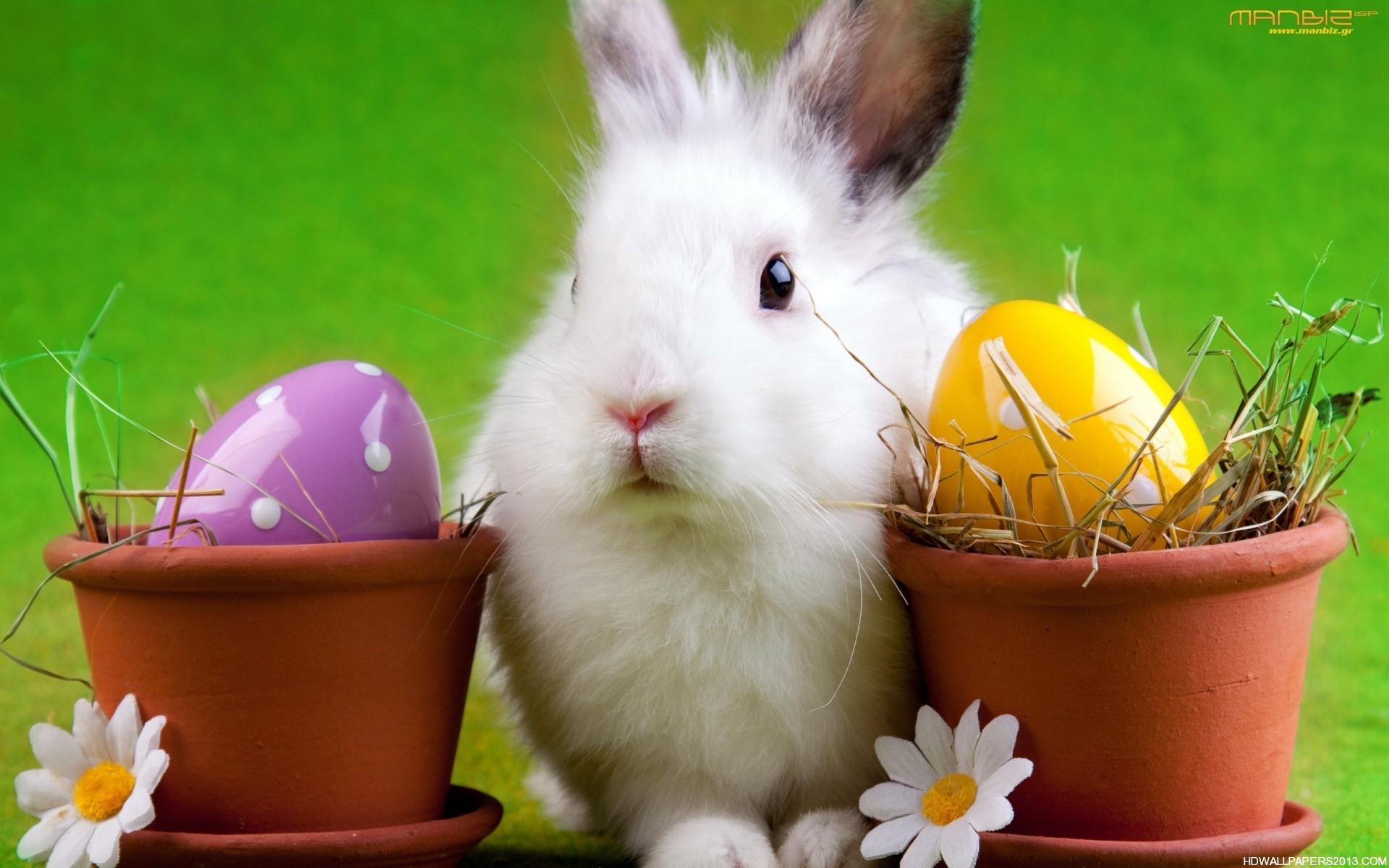 Easter Bunny Wallpaper Desktop High Definition 1920x1200