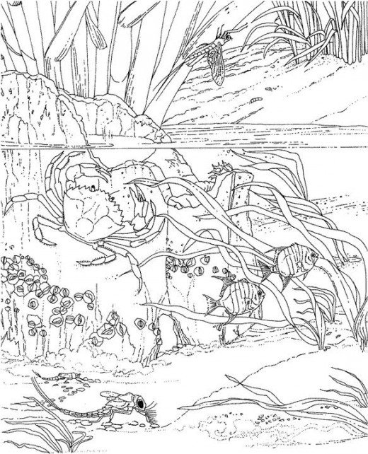 Adult Coloring Pages Best Wallpaper Online 2015 520x642