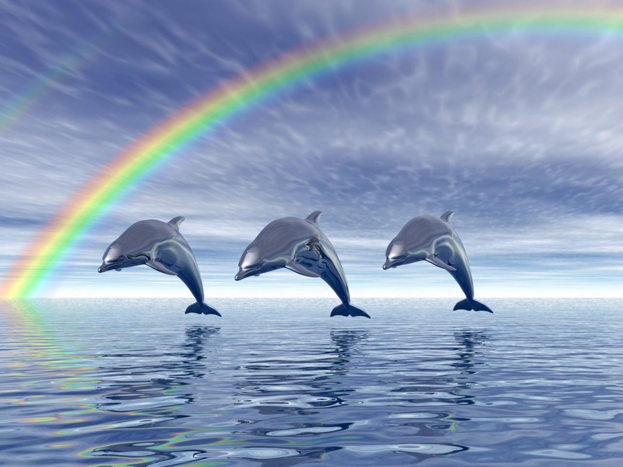 Dolphin Wallpaper wallpaper Dolphin Wallpaper hd wallpaper 1280x960