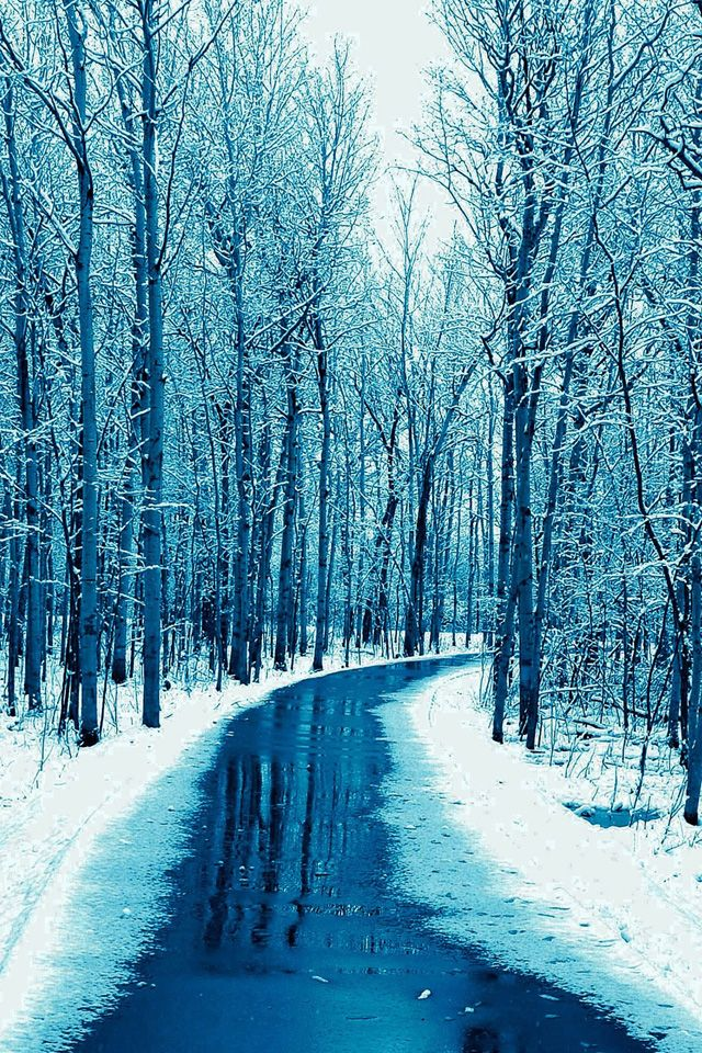 Forest Road Wallpaper snow winter iphone wallpaper in 2020 640x960