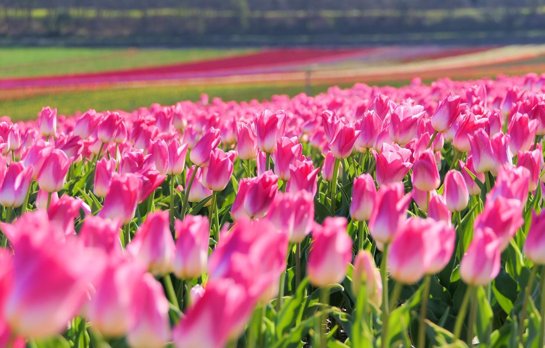Wallpaper field light flowers strip glade bright spring 1332x850