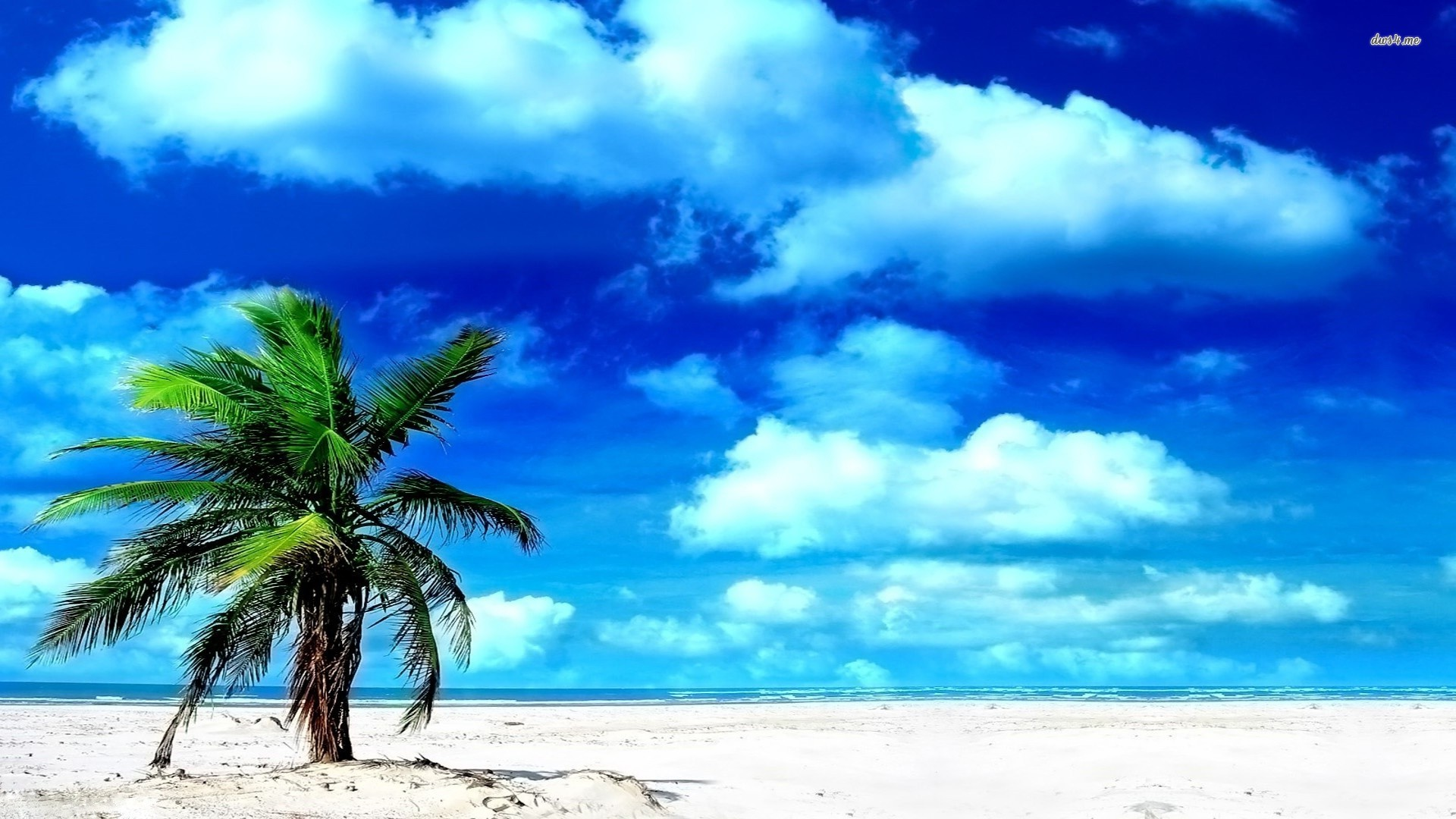 lonely palm tree Desktop Backgrounds for HD Wallpaper wall 1920x1080