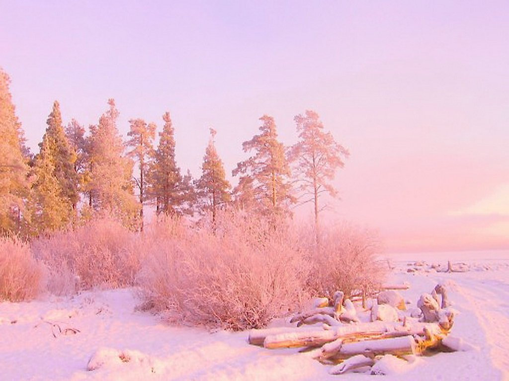 50 pink and gold desktop wallpaper on wallpapersafari - Rose in snow wallpaper ...