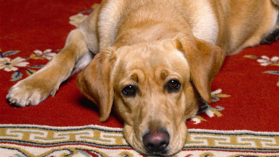 Dog Wallpapers And Screensavers Wallpapersafari