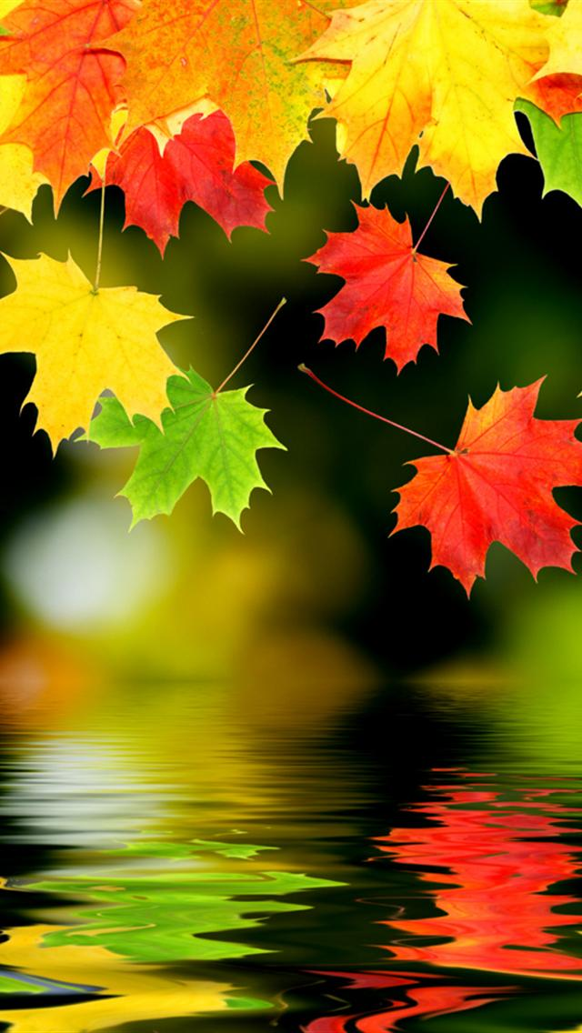 autumn leaves backgrounds for iphone 5 640x1136 hd iphone 5 wallpapers 640x1136