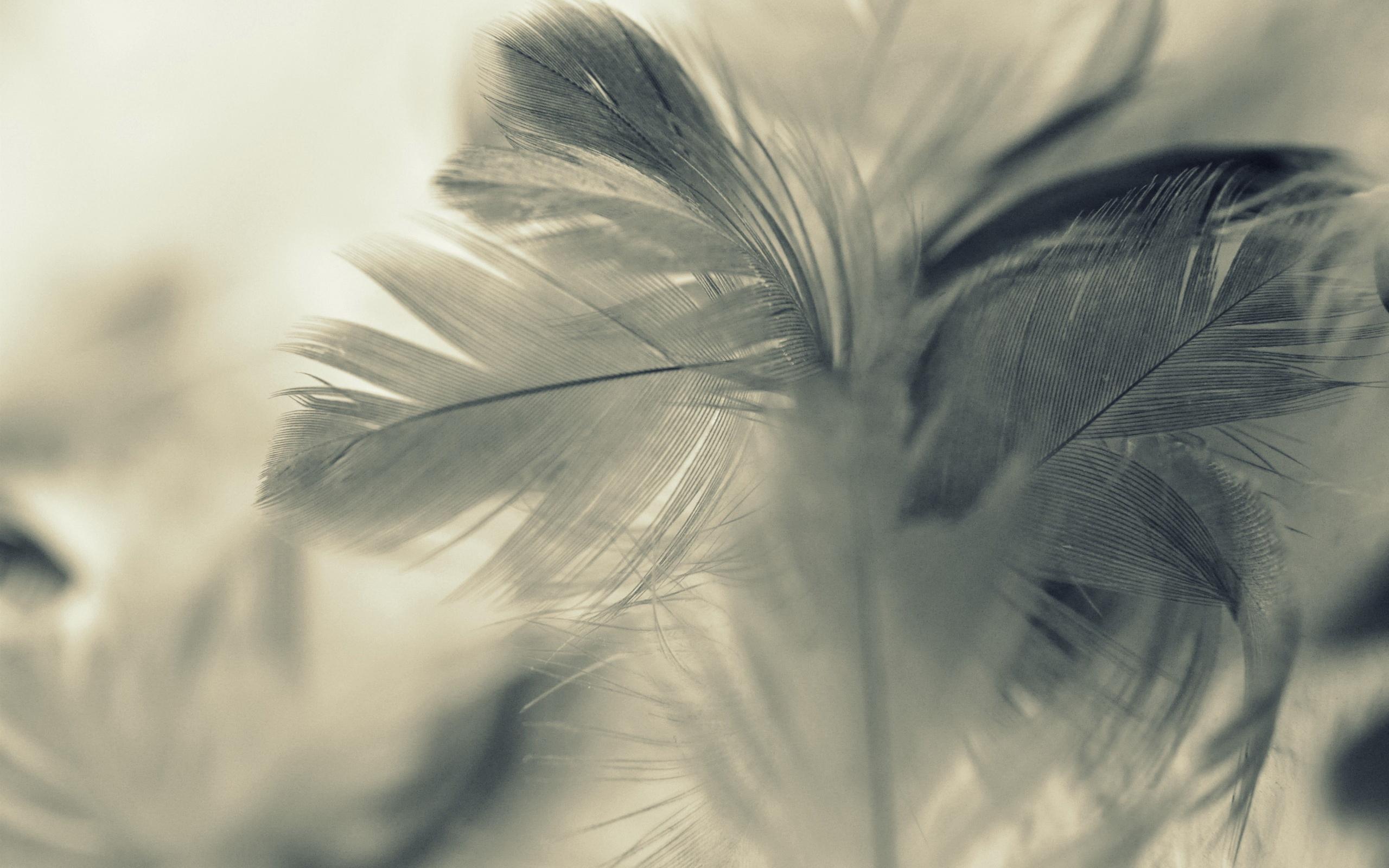 Feather Wallpaper Background 12717 2560x1600   uMadcom 2560x1600