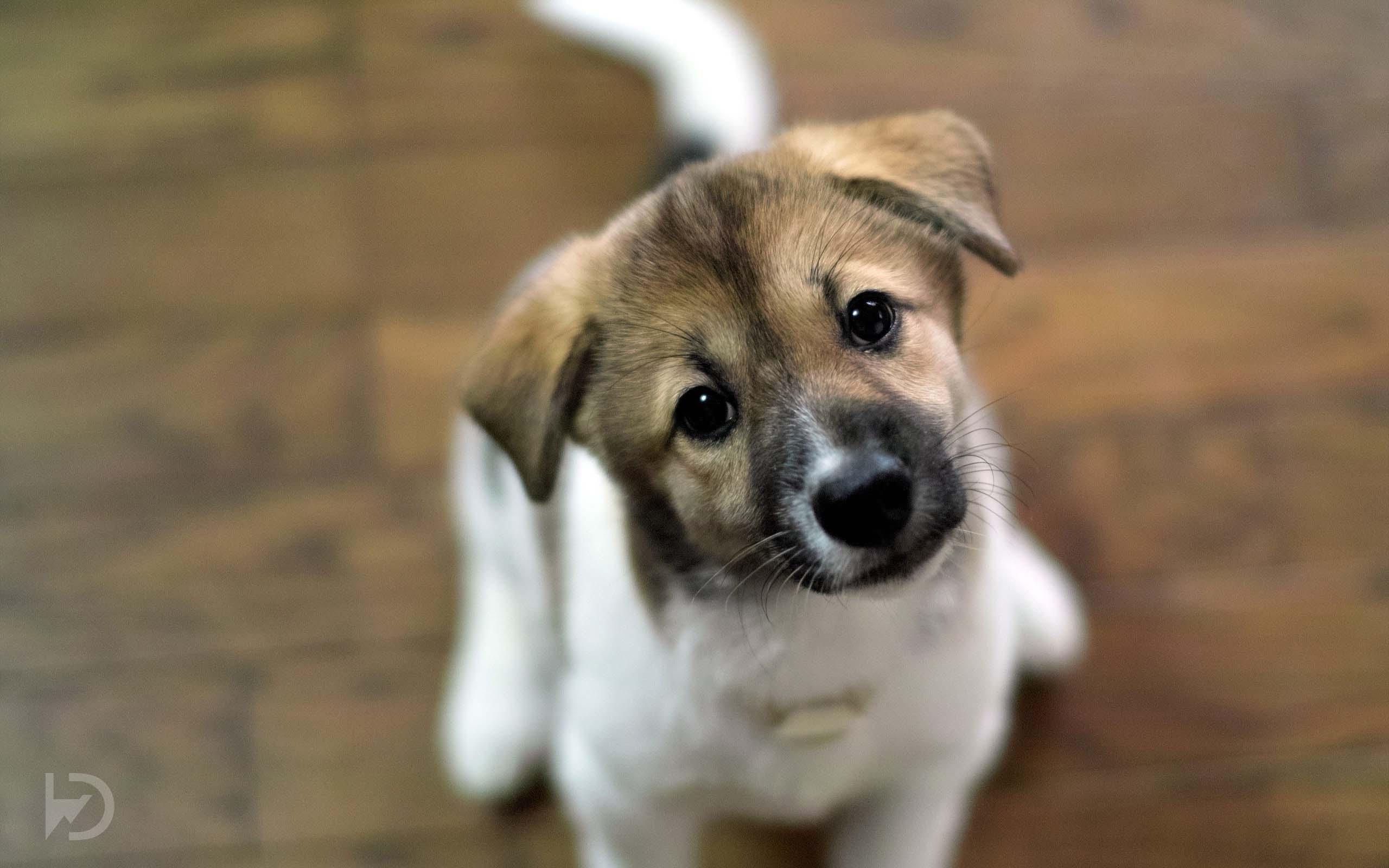 48] Cute Puppy Wallpaper HD on WallpaperSafari 2560x1600