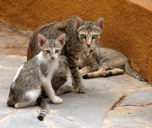 Funny Cat Family PC Android iPhone and iPad Wallpapers and Pictures 640x541