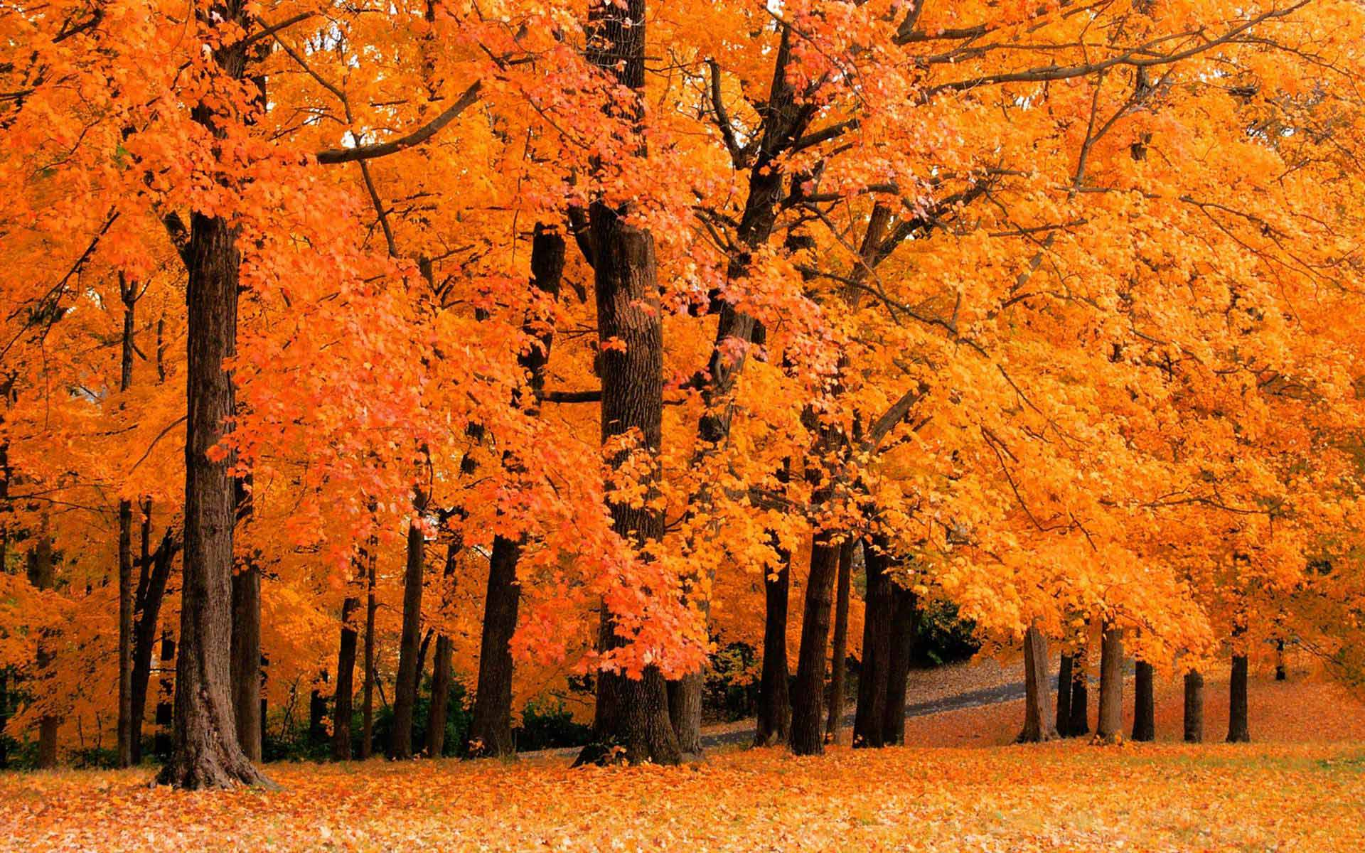 Fall Wallpapers For Desktop 8TBLG3Ljpg   Picseriocom 1920x1200