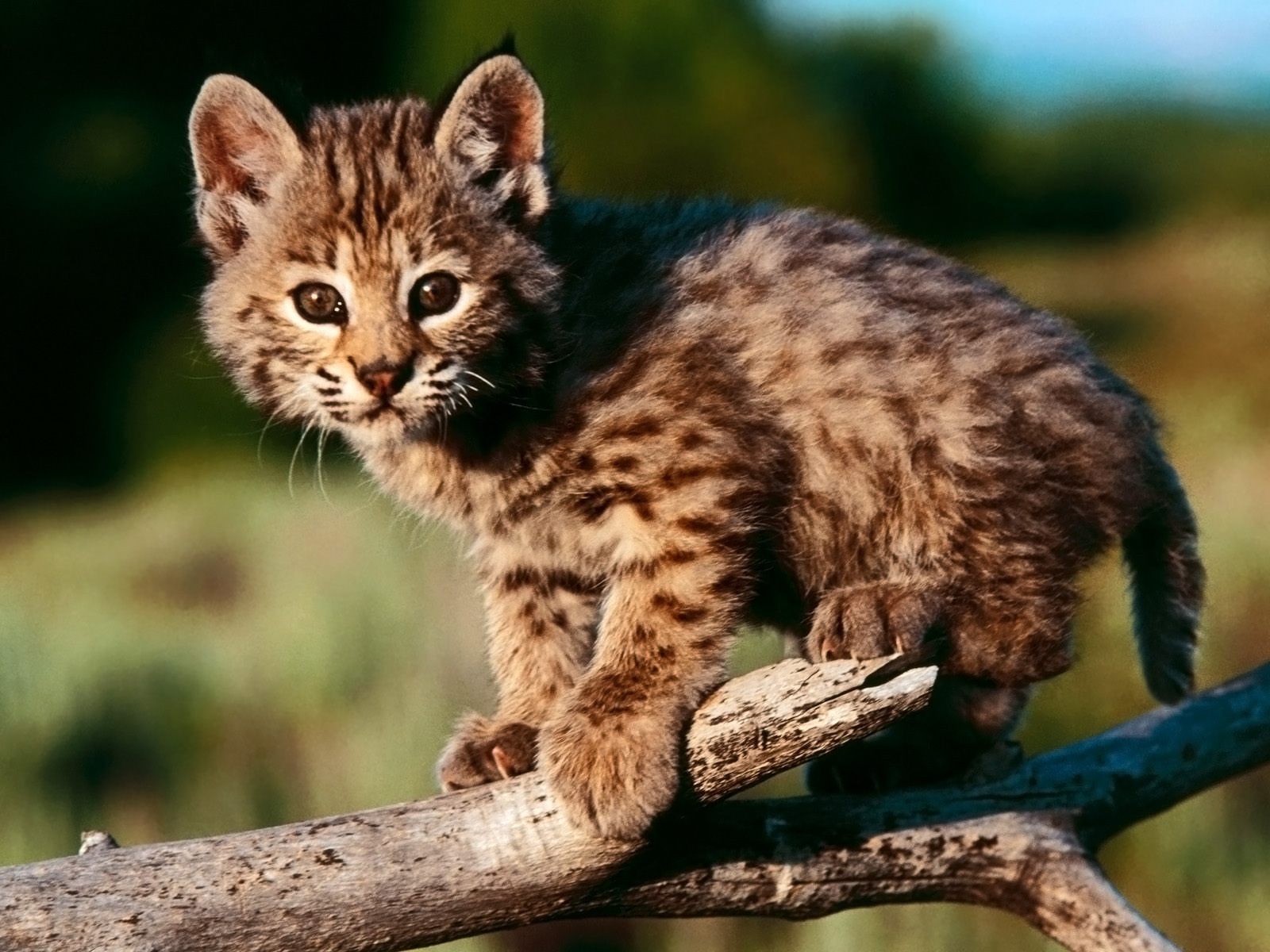 Cute Kittens images Cute Wallpapers HD wallpaper and background photos 1600x1200
