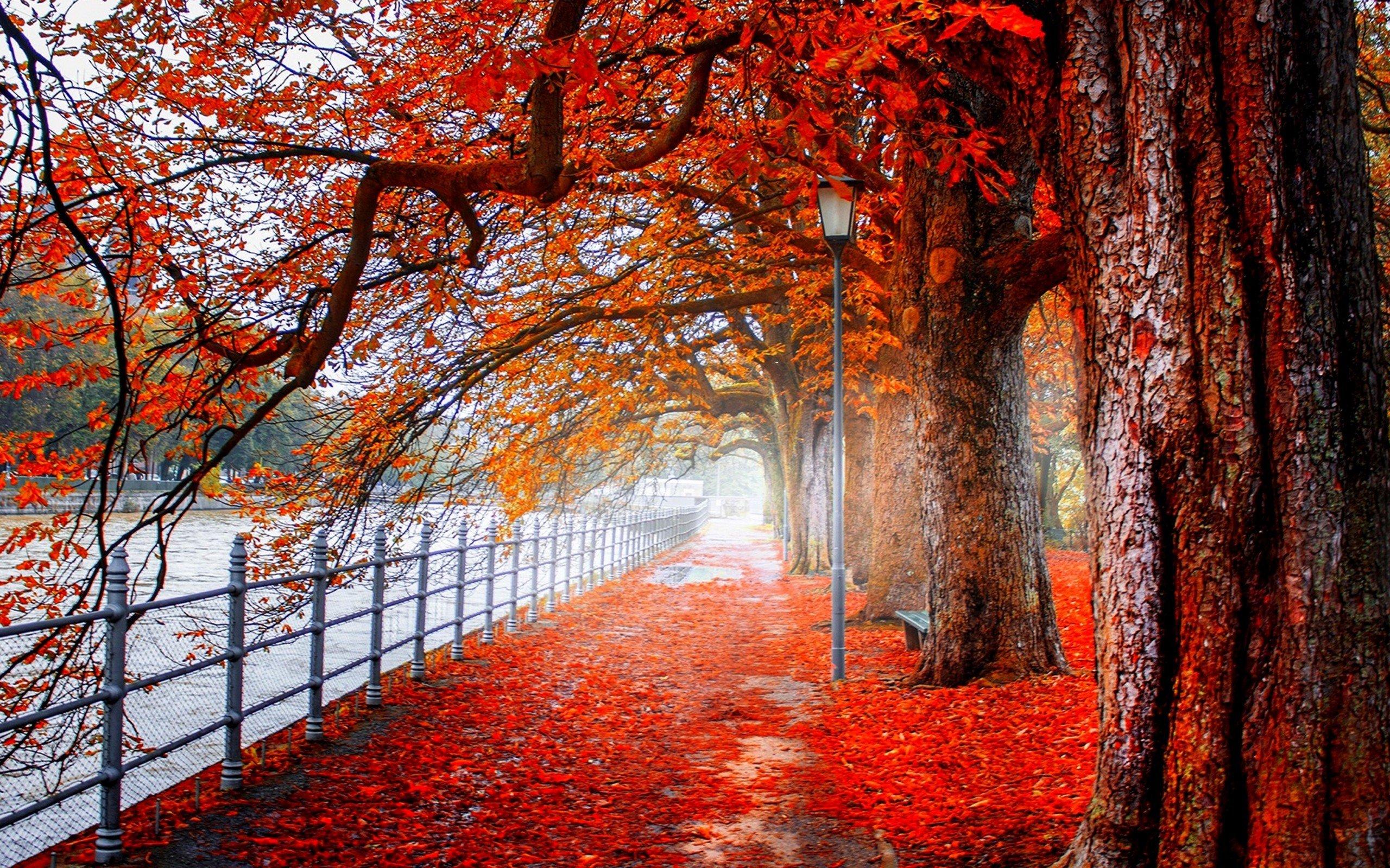 forest cover photo 8AVILj
