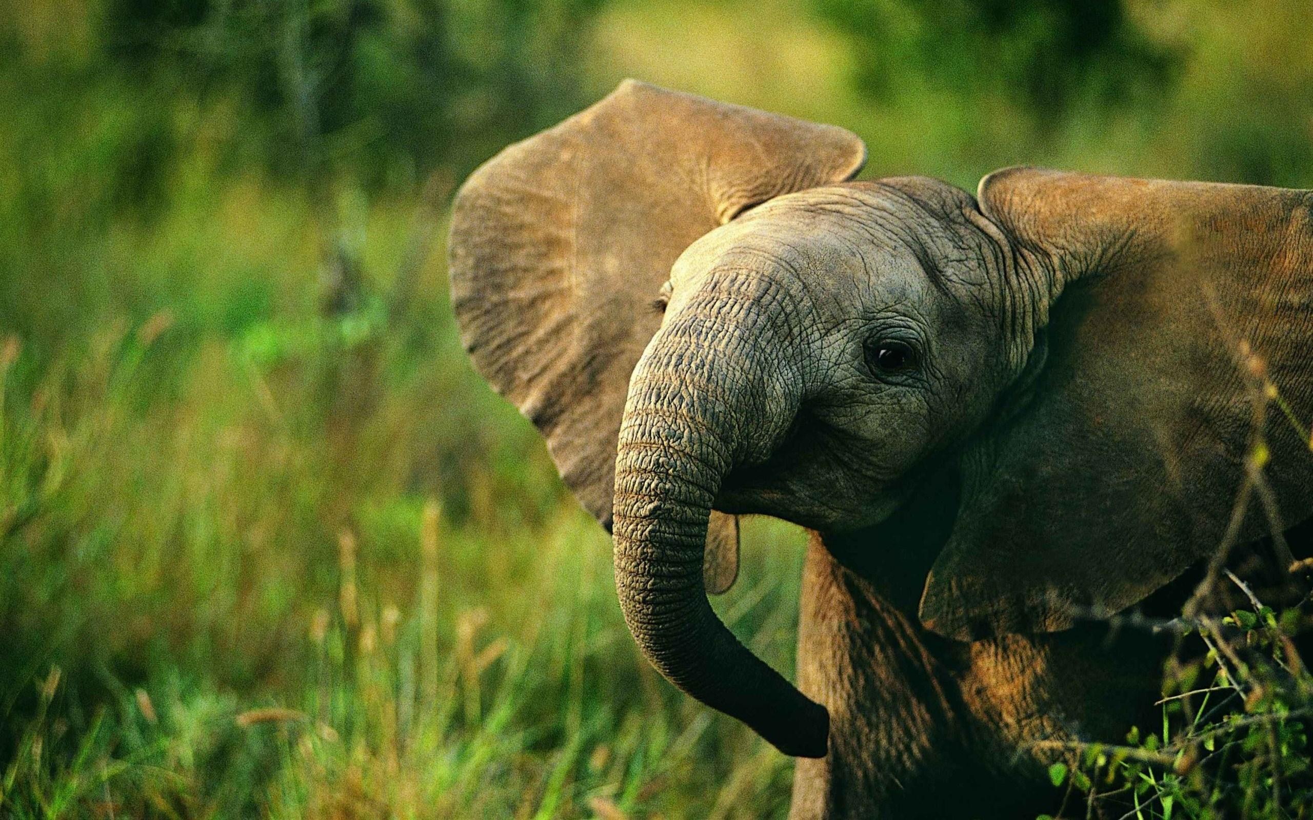 baby elephant nature wallpaper 2560x1600   Magic4Wallscom 2560x1600