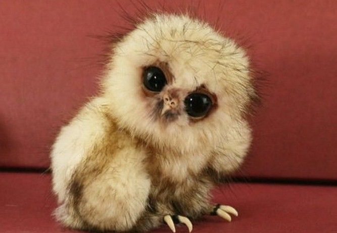 12 Baby Animals So Ugly They Are Cute