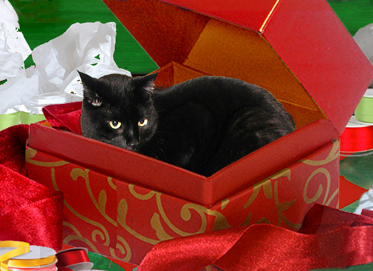 Image result for black cat in gift box