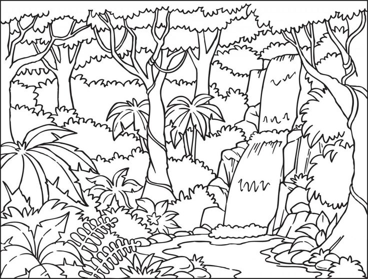 Free Download Rainforest Coloring Pages Color Jungle Coloring Book  Wallpaper More [736x559] For Your Desktop, Mobile & Tablet Explore 47+  Coloring Book Wallpaper Color Your Own Wallpaper, Color Me Wallpaper,