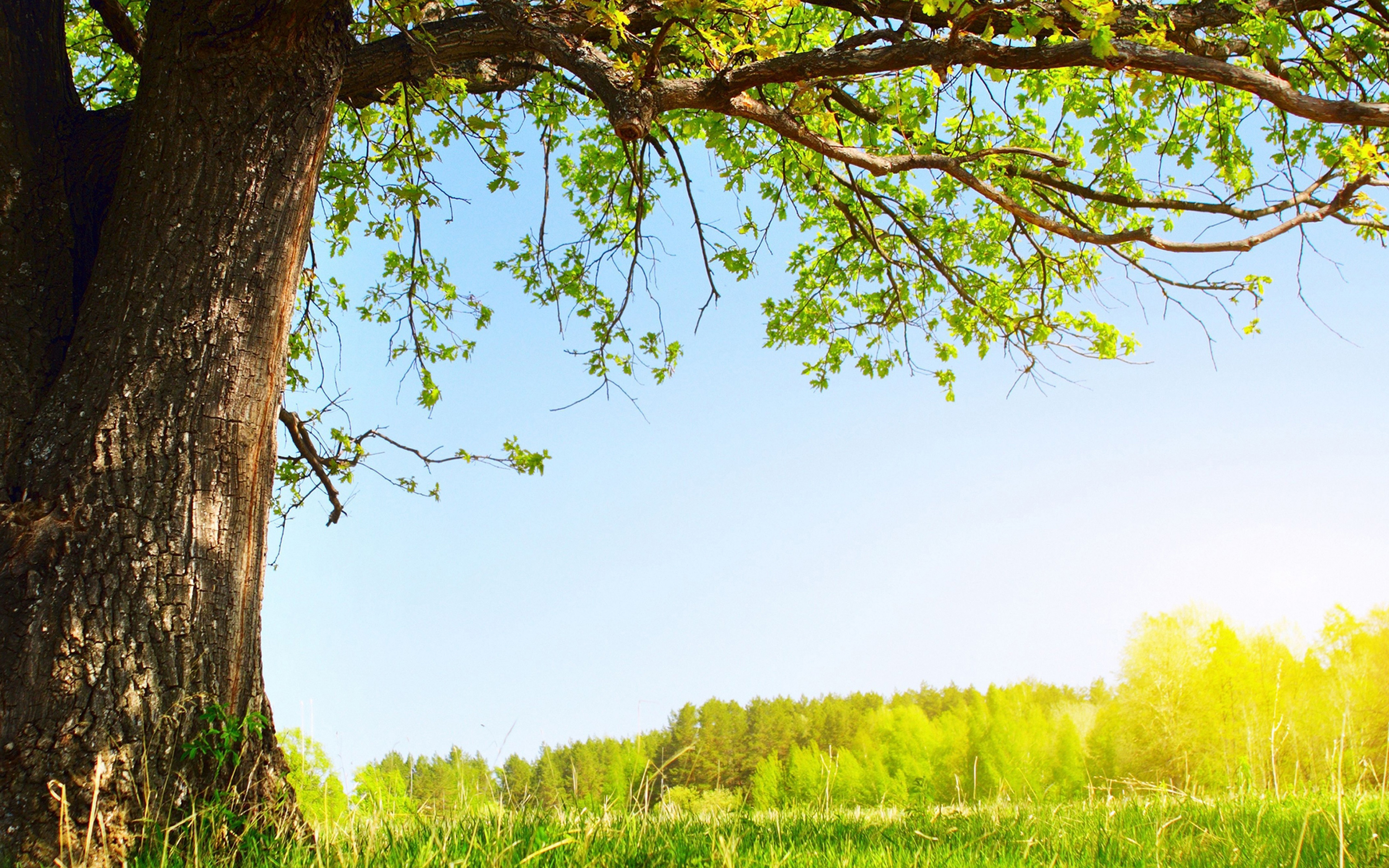 Tree background wallpaper wallpapersafari for Tree wallpaper for walls
