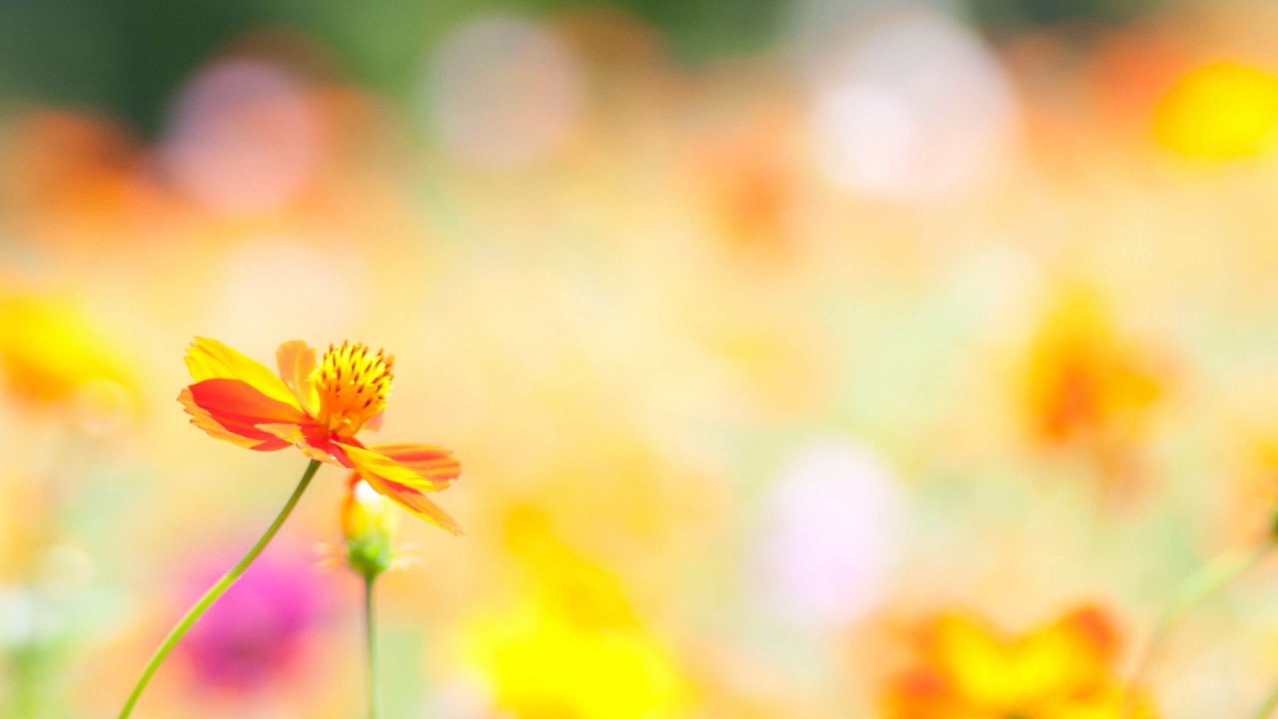 Summer Flower Wallpapers Images HD Pictures 2560x1440