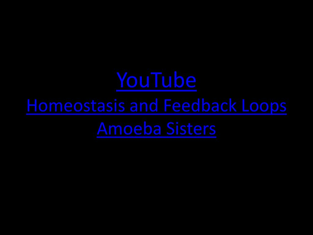 Homeostasis   ppt download 1024x768