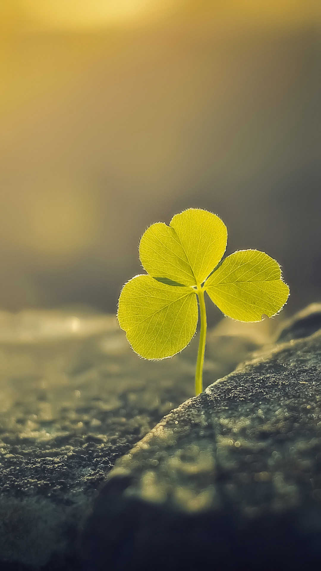 Three Leaf Clover Sunlight Macro Android Wallpaper download 1080x1920