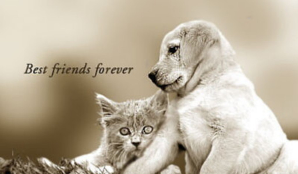 Best Friends Forever Wallpaper  yvt2 wallpapers55com   Best 1024x600