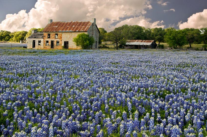 Texas Wildflower Wallpaper Wallpapersafari