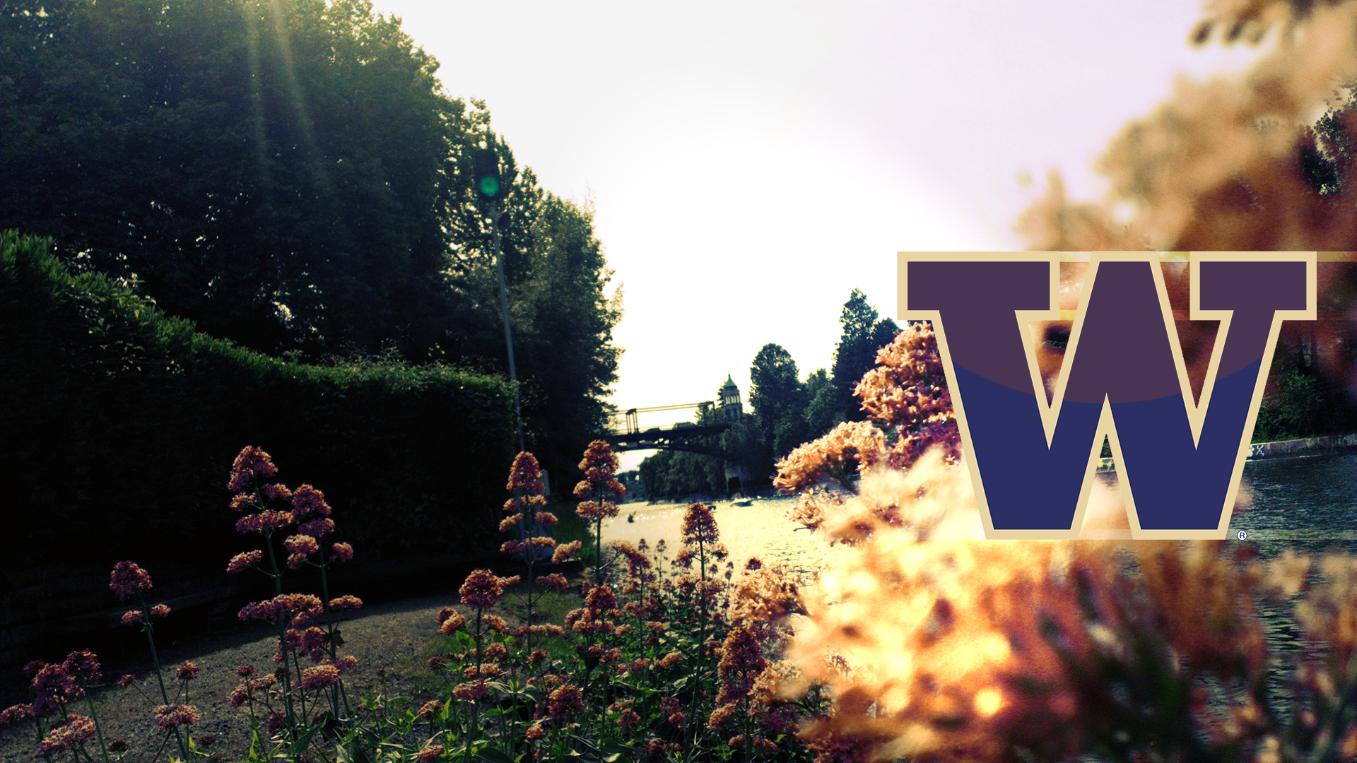 university of washington wallpaper by minotaurfayt d685g67jpg 1920x1080