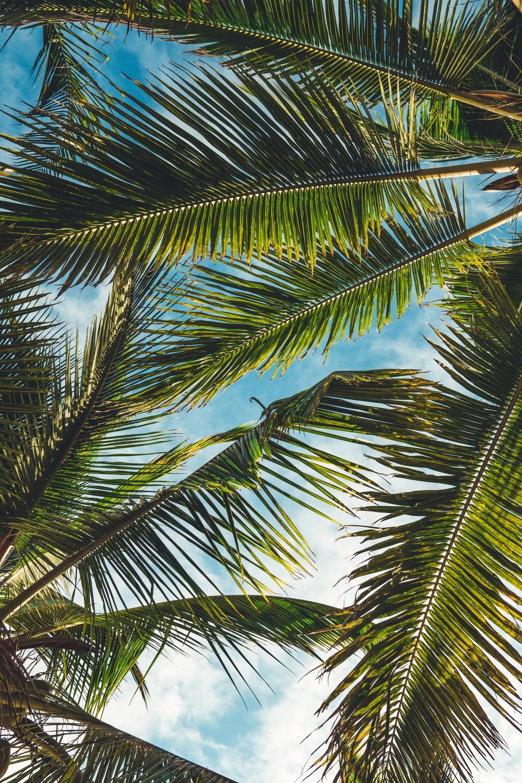 Palm Trees Wallpapers on WallpaperSafari