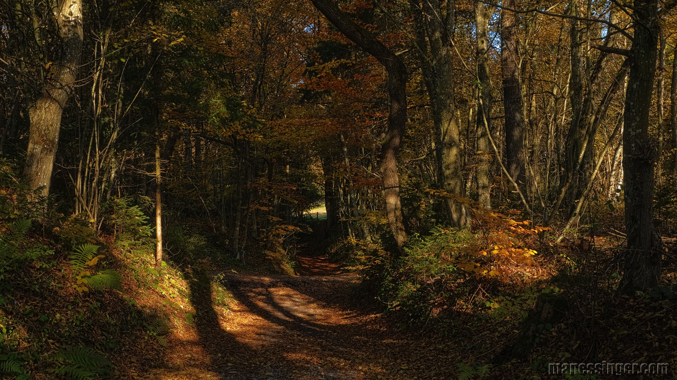 Wallpaper, foliage, wallpapers, autumn