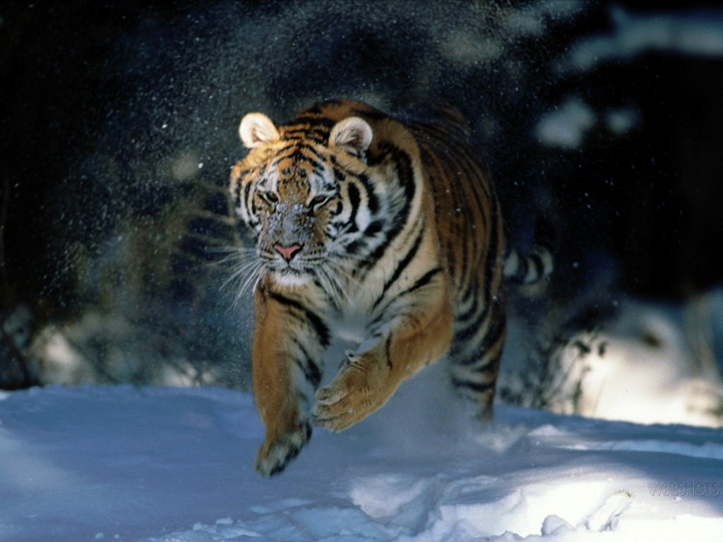Animal Wallpapers Wild Animal Facts Videos Animals Pictures 1024x768