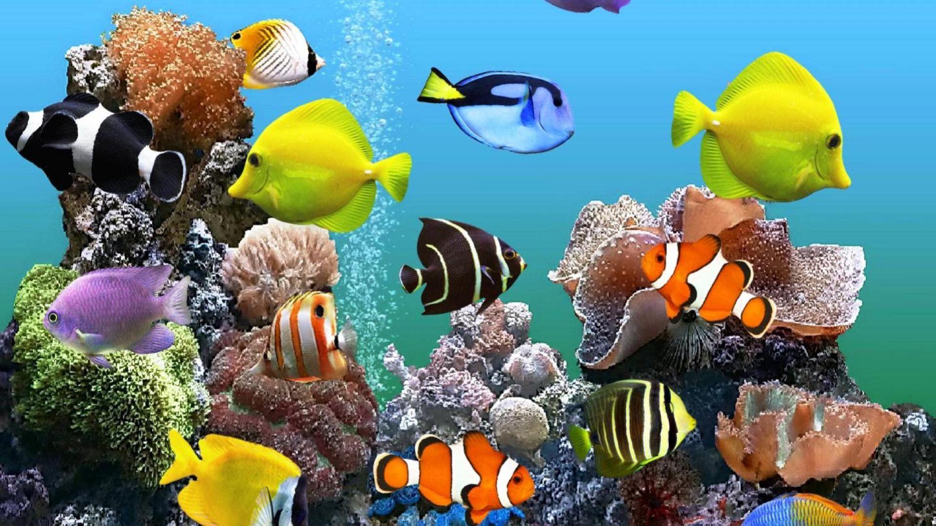 HD Aquarium Wallpapers   Top HD Aquarium Backgrounds 1920x1080
