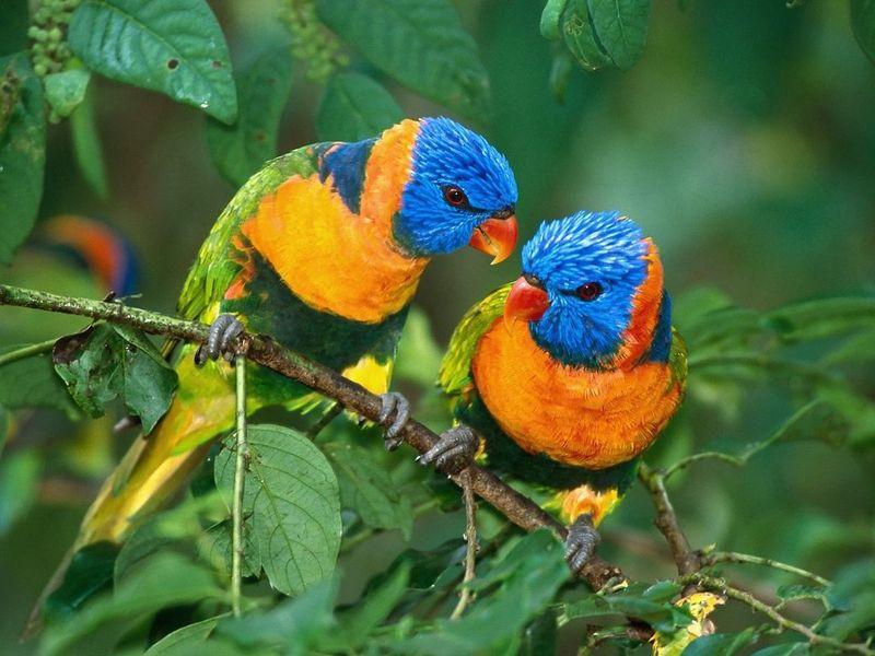 User reviews of Bright Birds Screensaver 102 800x600