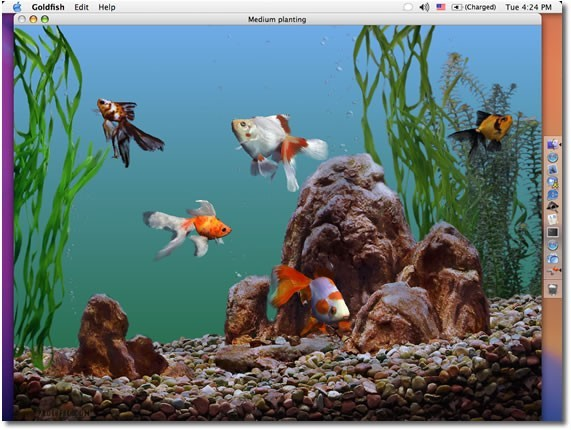 Free Download Cartoon Fish Tank Background 571x430 For Your Desktop Mobile Tablet Explore 50 Animated Goldfish Wallpaper And Screensaver 3d Moving Wallpapers Free
