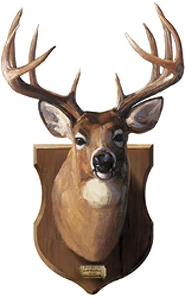 Deer Head Mount Peel and Stick Wall Mural   Wall Sticker Outlet 374x600