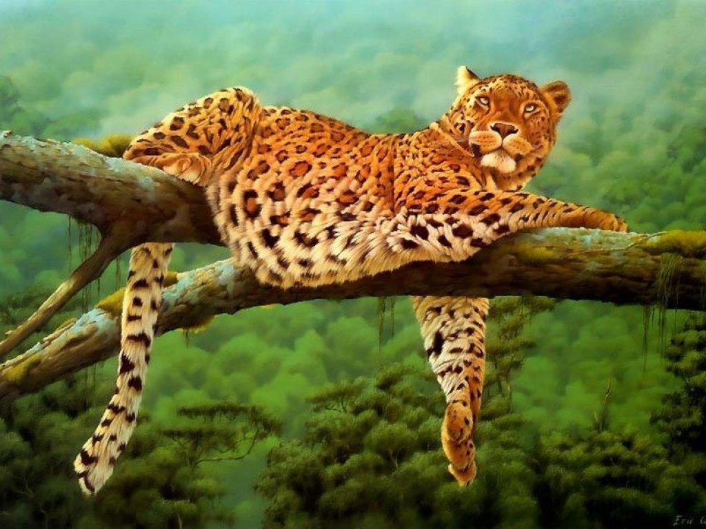 Leoparden Leopard Wallpapers HD Wallpapers 1024x768