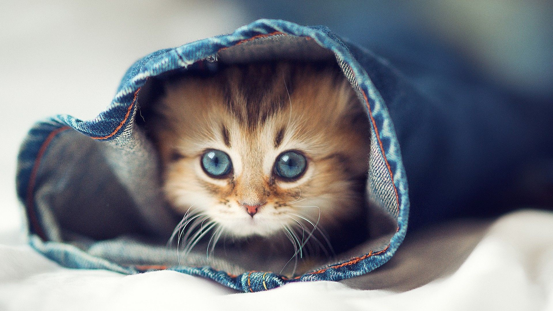 Cute Kitty Wallpapers   Top Cute Kitty Backgrounds 1920x1080