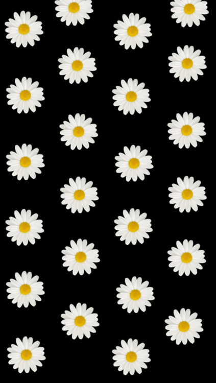 daisy wallpaper 423x750