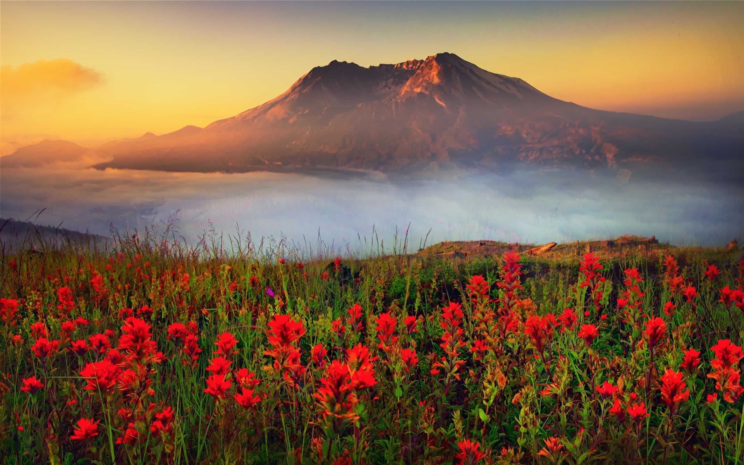 Best 48 Mount St Helens Wallpaper on HipWallpaper Amount 2560x1600