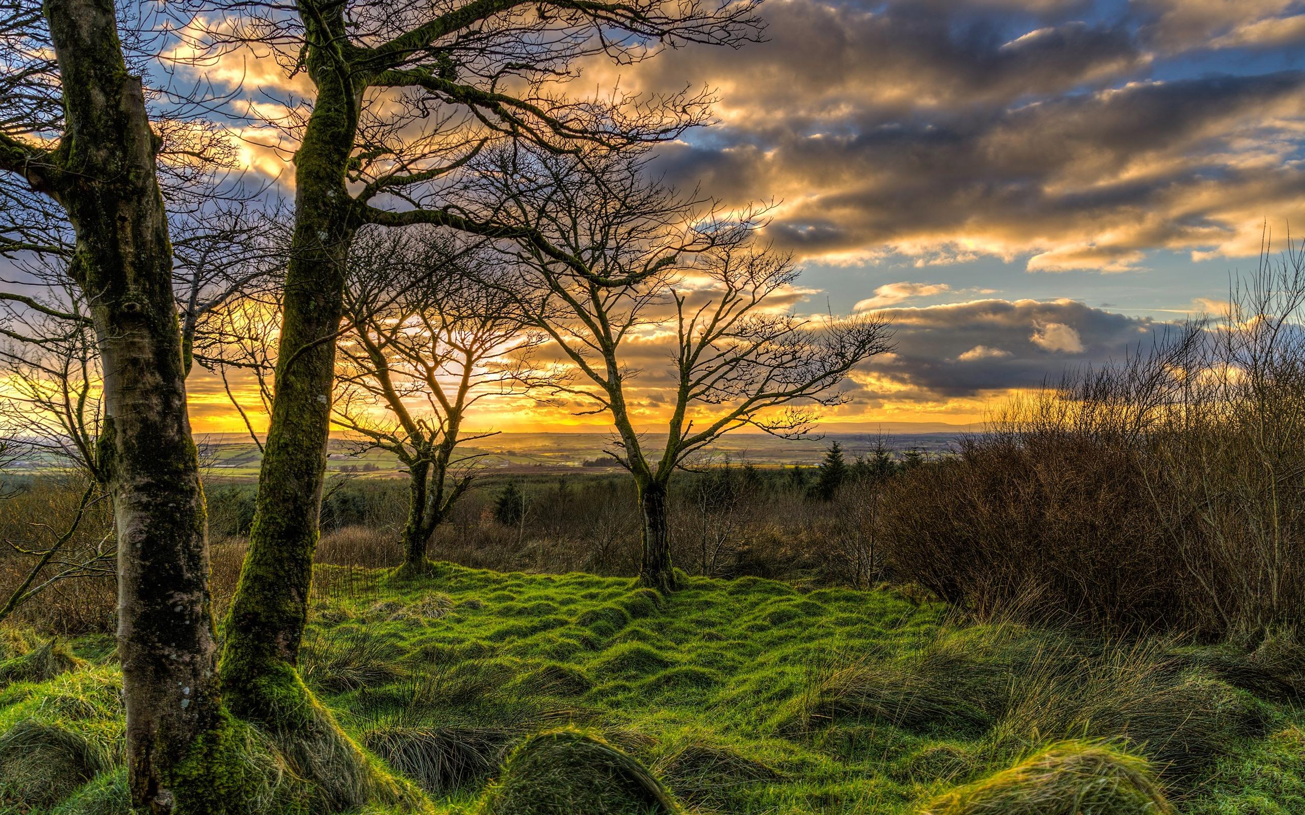 Wallpaper Northern Ireland UK nature landscape grass trees 2560x1600