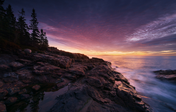 Acadia national park maine usa coast sunset tree rock wallpapers 596x380