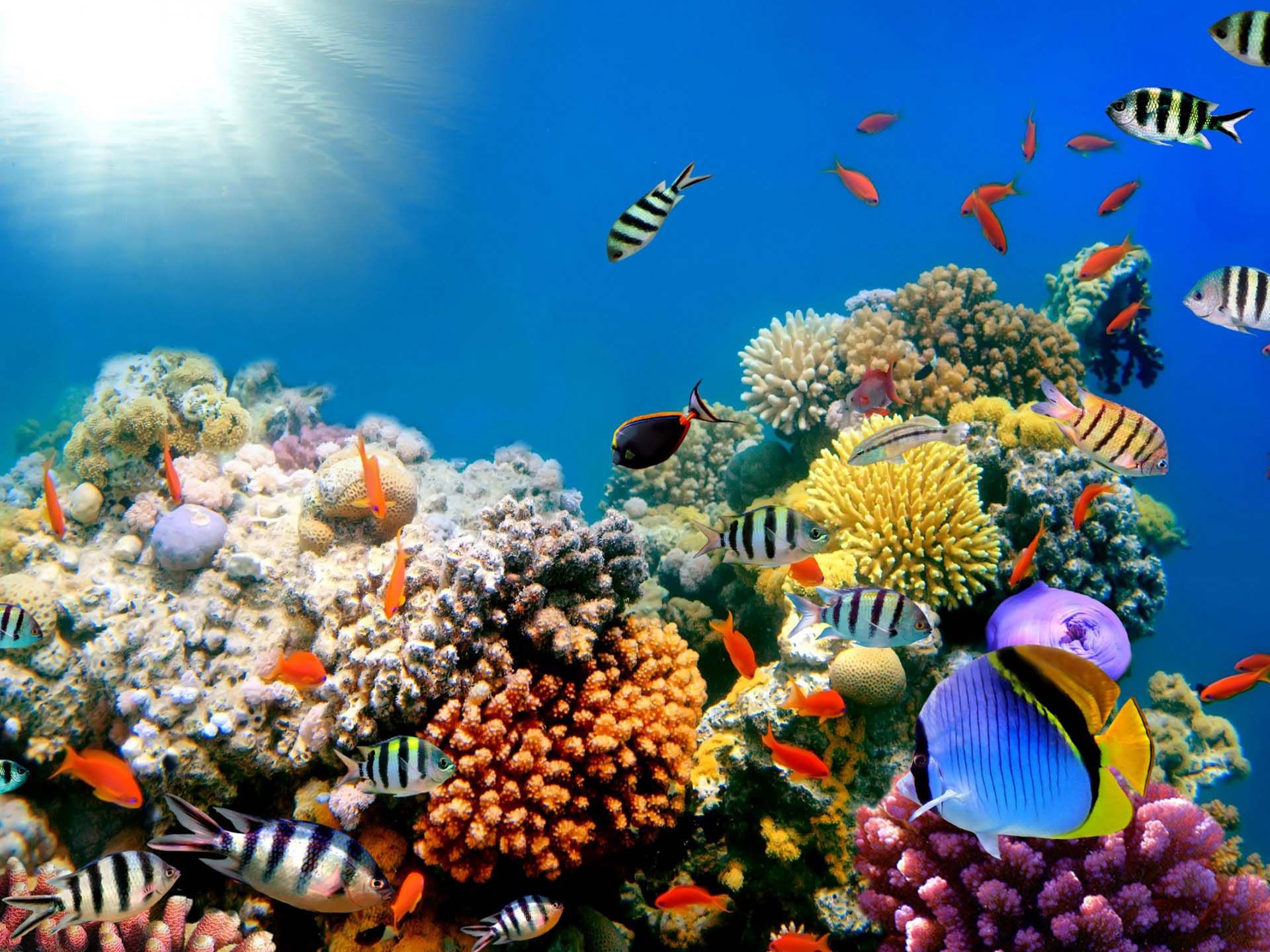 Saltwater fish desktop wallpaper wallpapersafari for Coral reef mural