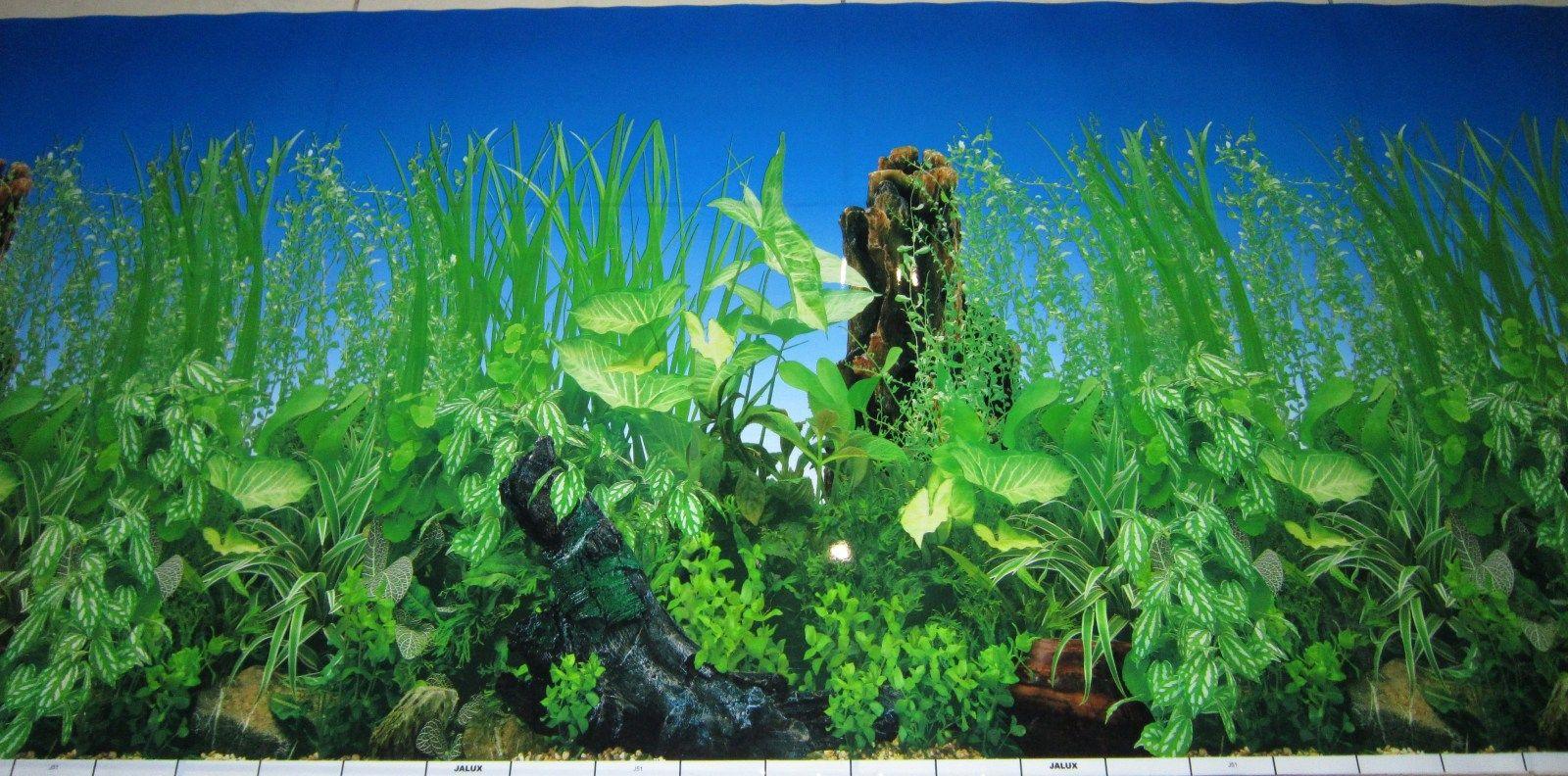 Aquarium Background Pictures - WallpaperSafari   1600 x 792 jpeg 308kB