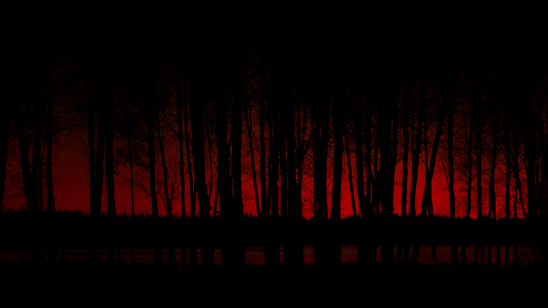 Hd Dark Forest Wallpaper Wallpapersafari