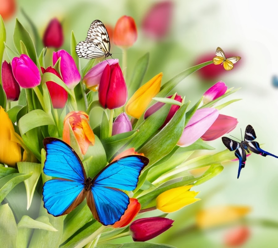 Colorful Butterflies Wallpapers Gallery 900x804