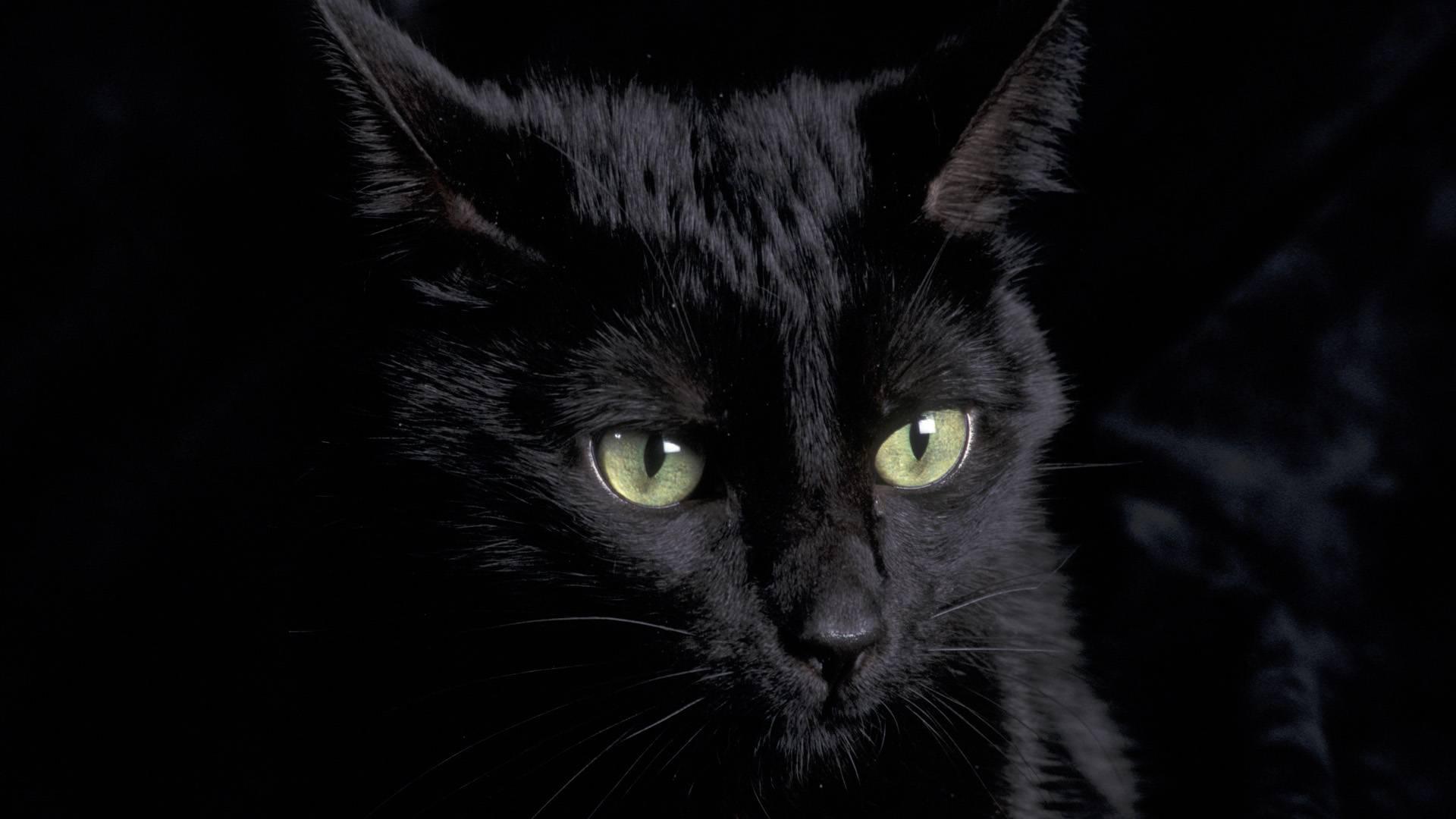 43 Black Cat Eyes Wallpaper On Wallpapersafari