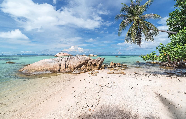 Wallpaper sea beach nature tropics palm trees coast Natur 1332x850