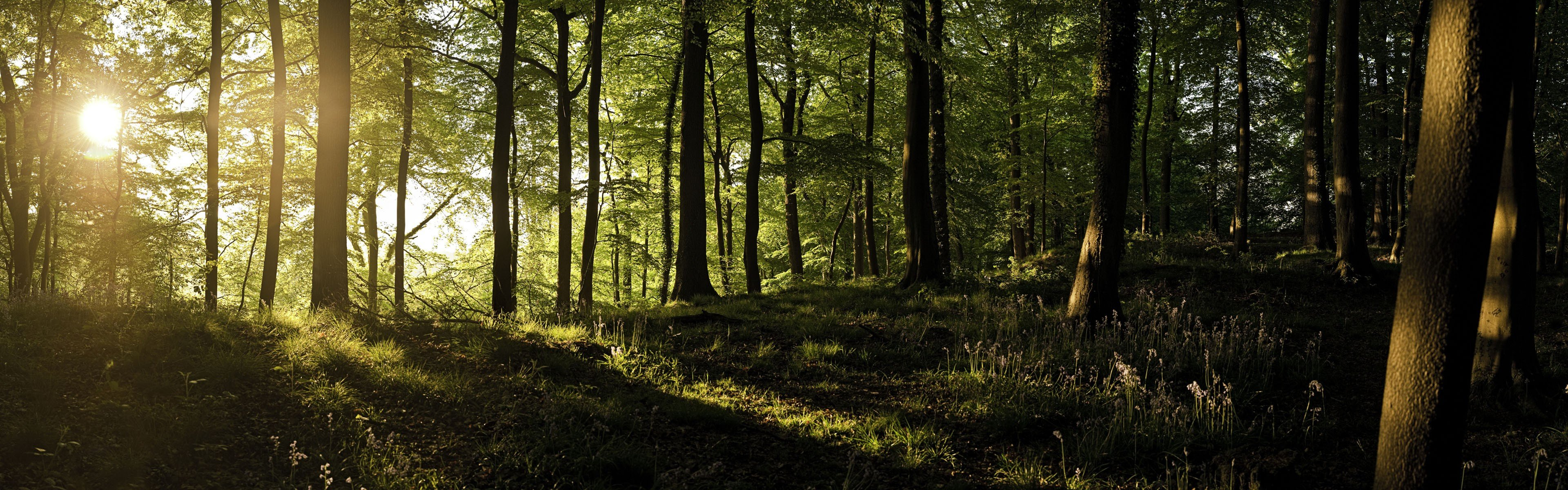England forests sunlight United Kingdom panorama wallpaper background 3840x1200