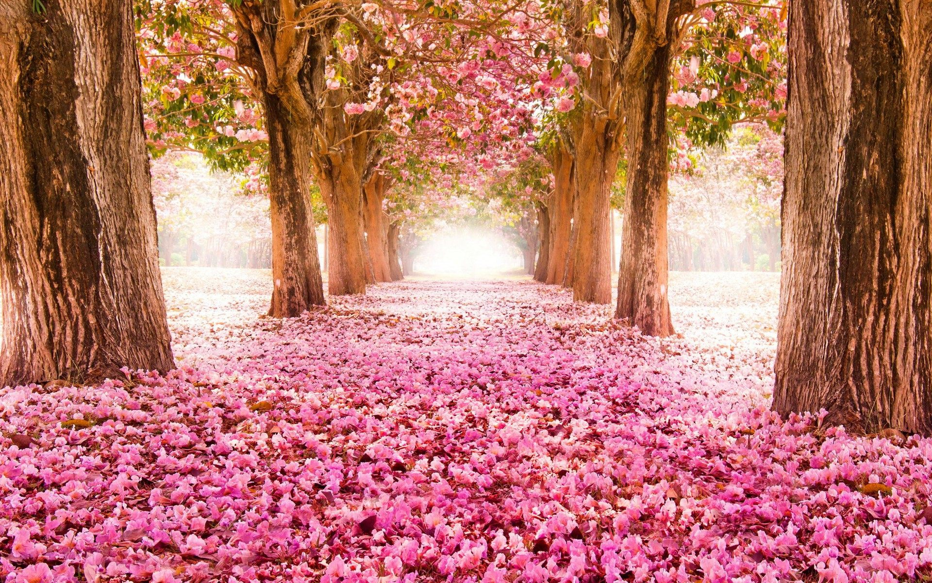 Beautiful Spring Flower Wallpaper Backgrounds 1920x1200