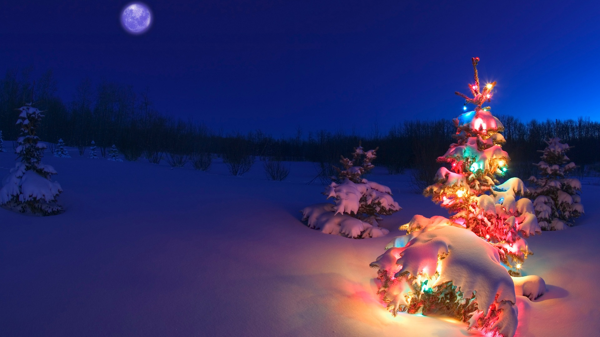 Christmas tree in the snow wallpapers Christmas tree in the snow 1920x1080
