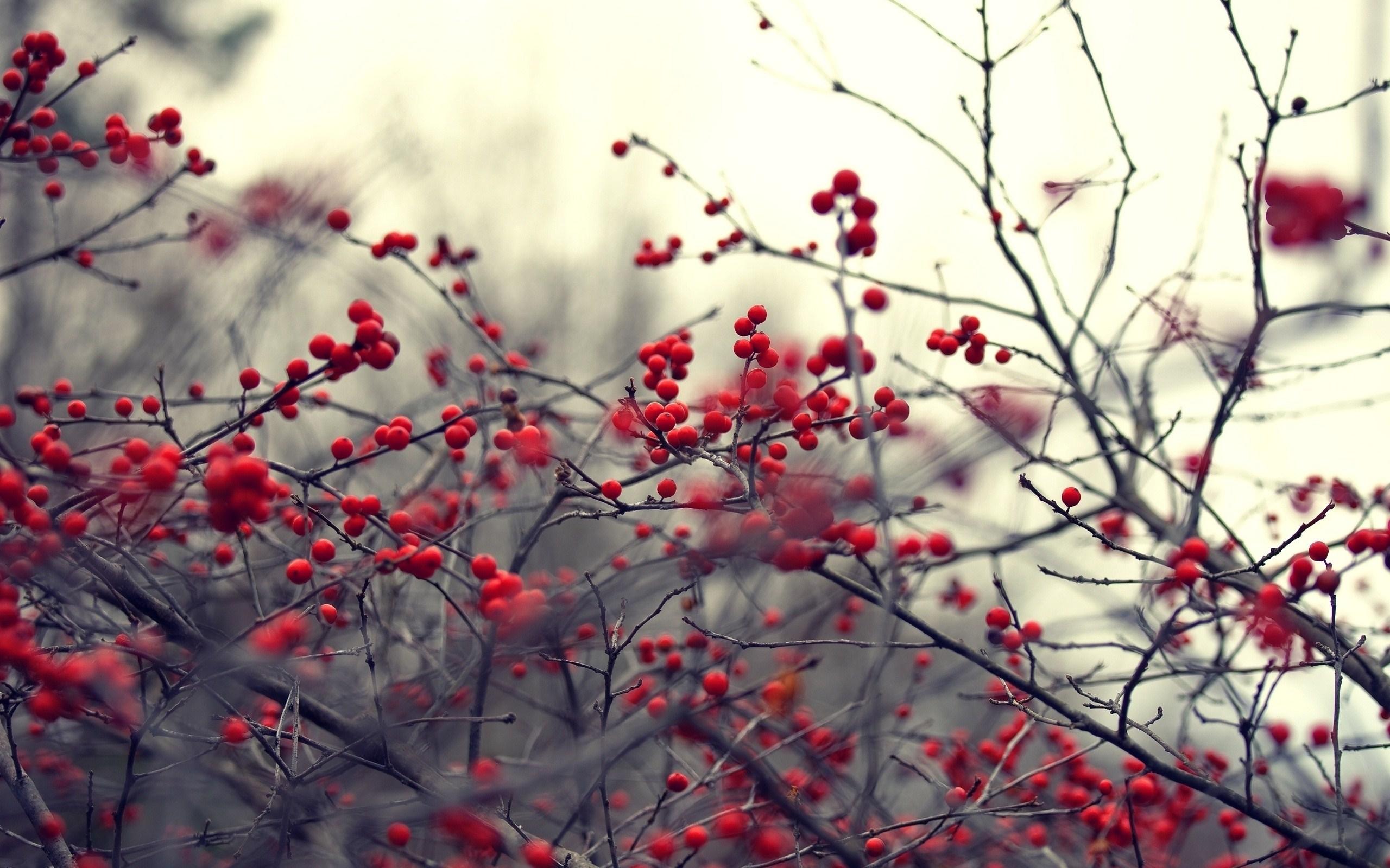 Nature Branches Red Berries Hd Wallpaper Wallpaper List 2560x1600