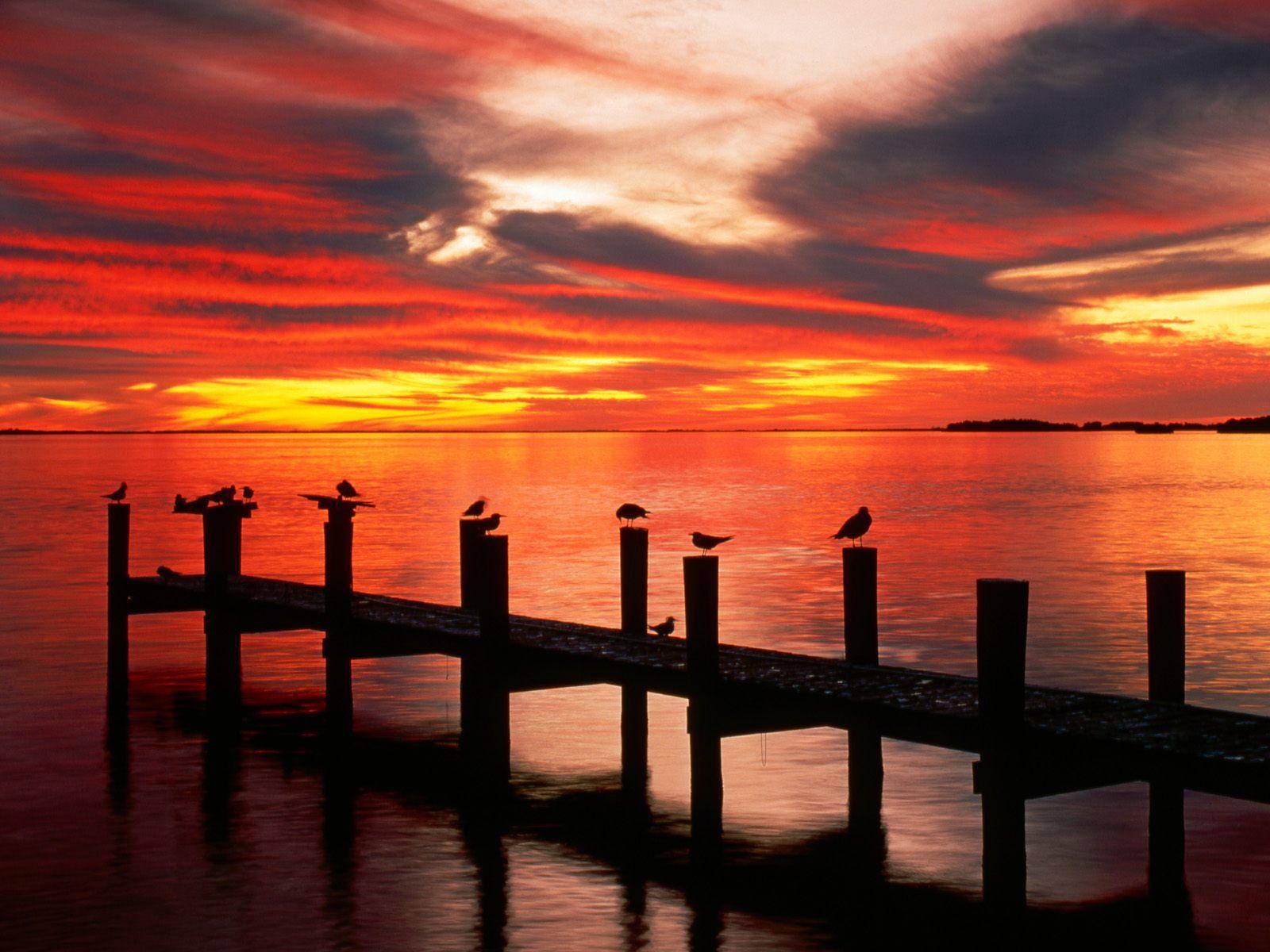 Seagulls at Sunset Florida Wallpapers HD Wallpapers 1600x1200